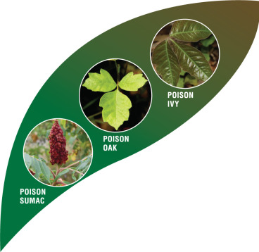 When the itching won't stop: Counseling on exposure to poison ivy